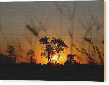 Wood Print featuring the photograph Cherished Vision by Everett Houser