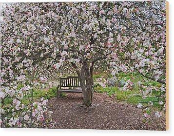 Cherries Jubilee Wood Print by Lynn Bauer