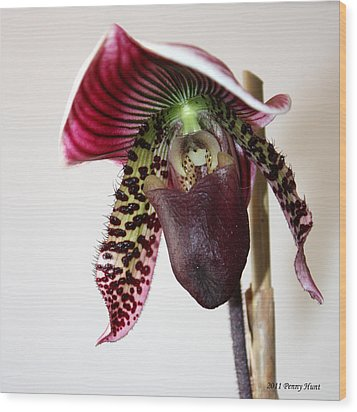 Wood Print featuring the photograph Cherry Black Lady Slipper by Penny Hunt