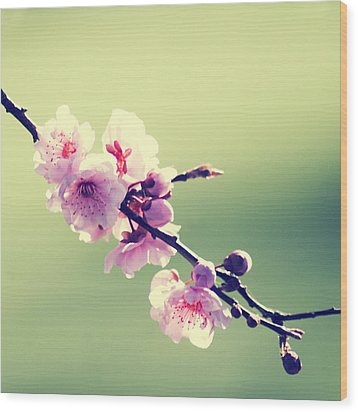 Wood Print featuring the photograph Cherry Blooms by Yulia Kazansky
