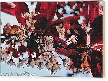 Cherry Blosoms 2 Wood Print by Danielle  Parent