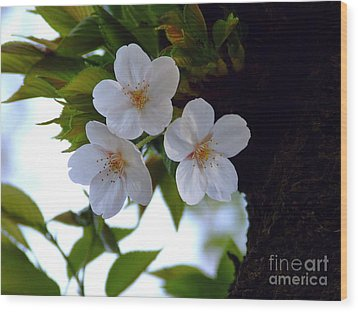 Wood Print featuring the photograph Cherry Blossom by Andrea Anderegg