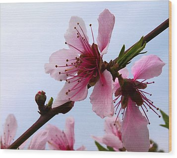 Cherry Blossom Wood Print by Camille Lopez