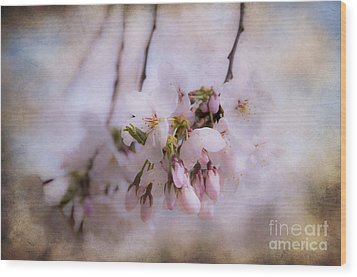 Cherry Blossom Dreams Wood Print by Terry Rowe