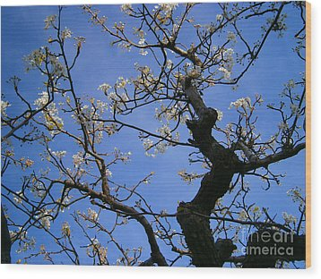 Cherry Blossom Wood Print by Drew Shourd