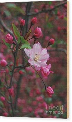 Wood Print featuring the photograph Cherry Blossom by Eva Kaufman