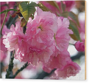 Wood Print featuring the photograph Cherry Blossom by Gena Weiser