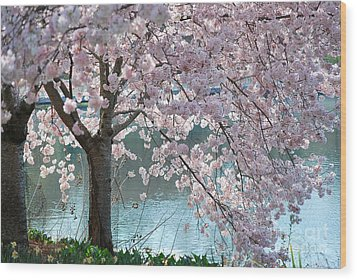Cherry Blossom Wood Print by Robin Hassler