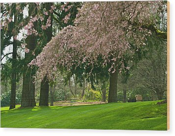 Wood Print featuring the photograph Cherry Blossom by Sabine Edrissi