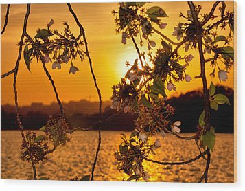 Wood Print featuring the photograph Cherry Blossom Sunset by Mitchell R Grosky