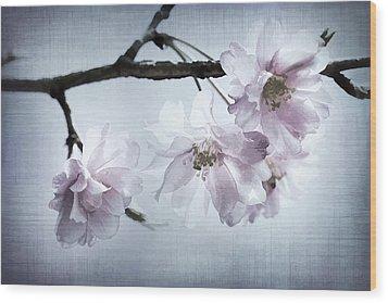 Cherry Blossom Sweetness Wood Print by Kathy Clark