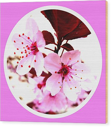 Cherry Blossom Wood Print by The Creative Minds Art and Photography