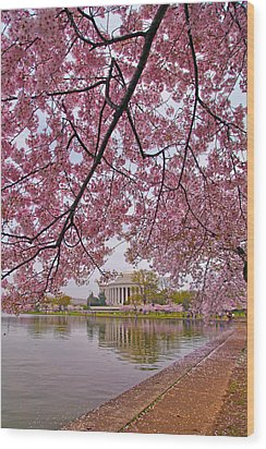 Cherry Blossom Tree Wood Print by Mitch Cat