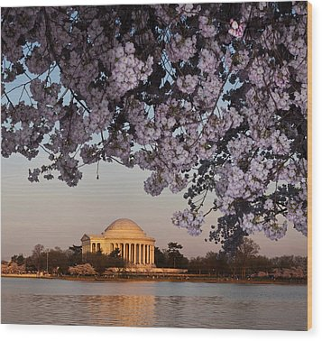 Cherry Blossom Tree With A Memorial Wood Print