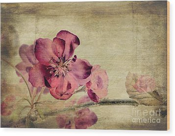 Cherry Blossom With Textures Wood Print by John Edwards