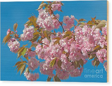 Cherry Blossoms 2 Wood Print by Sharon Talson