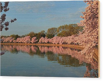 Cherry Blossoms 2013 - 001 Wood Print by Metro DC Photography