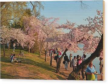 Cherry Blossoms 2013 - 007 Wood Print by Metro DC Photography