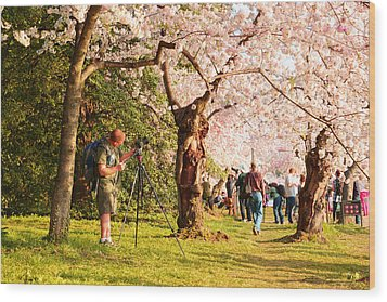 Cherry Blossoms 2013 - 009 Wood Print by Metro DC Photography