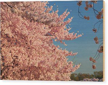 Cherry Blossoms 2013 - 013 Wood Print by Metro DC Photography