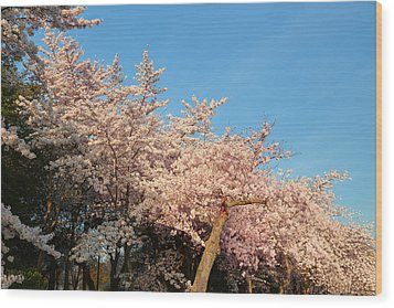 Cherry Blossoms 2013 - 019 Wood Print by Metro DC Photography