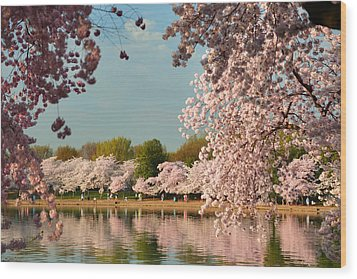 Cherry Blossoms 2013 - 023 Wood Print by Metro DC Photography