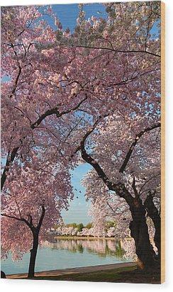 Cherry Blossoms 2013 - 024 Wood Print
