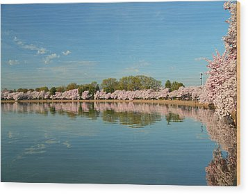 Cherry Blossoms 2013 - 026 Wood Print by Metro DC Photography