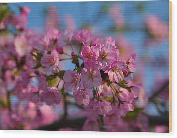 Cherry Blossoms 2013 - 031 Wood Print by Metro DC Photography