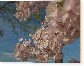 Cherry Blossoms 2013 - 035 Wood Print by Metro DC Photography
