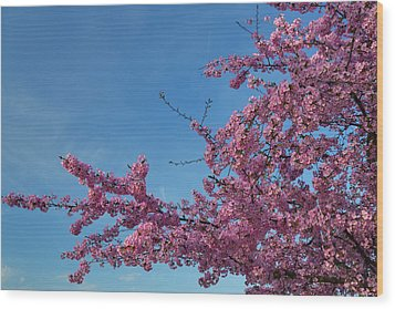 Cherry Blossoms 2013 - 037 Wood Print by Metro DC Photography