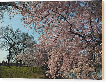 Cherry Blossoms 2013 - 038 Wood Print by Metro DC Photography
