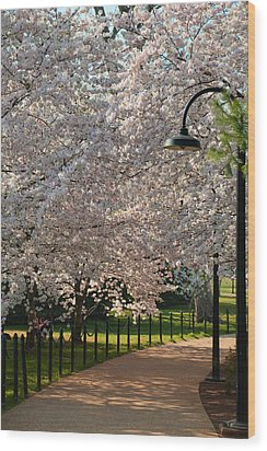 Cherry Blossoms 2013 - 060 Wood Print by Metro DC Photography
