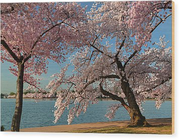 Cherry Blossoms 2013 - 063 Wood Print by Metro DC Photography