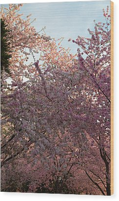 Cherry Blossoms 2013 - 065 Wood Print by Metro DC Photography