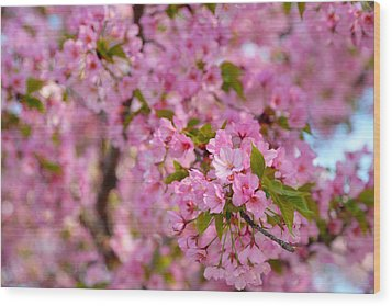 Cherry Blossoms 2013 - 096 Wood Print by Metro DC Photography