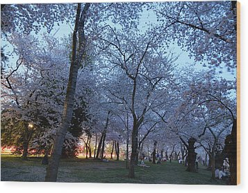 Cherry Blossoms 2013 - 100 Wood Print by Metro DC Photography