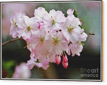 Cherry Blossoms And A Bee Wood Print by Patti Whitten