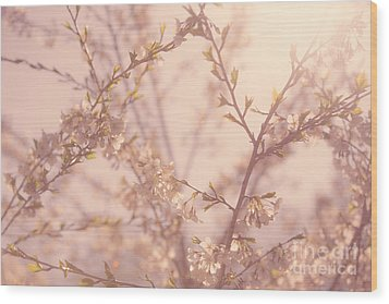 Cherry Blossoms Wood Print by Diane Diederich