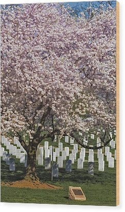 Cherry Blossoms Grace Arlington National Cemetery Wood Print by Susan Candelario
