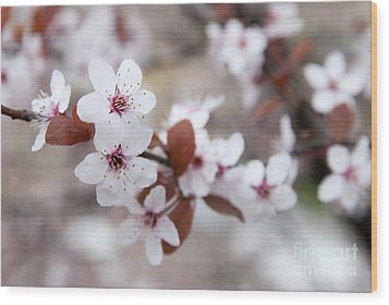 Cherry Blossoms Wood Print by Hannes Cmarits