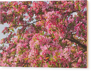Wood Print featuring the photograph Cherry Blossoms In Washington D.c. by Mitchell R Grosky