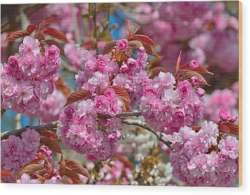Cherry Blossoms Wood Print by Kathy King