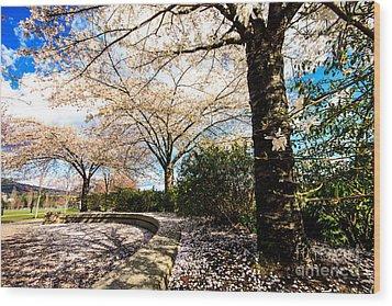 Cherry Blossoms Wood Print by Nancy Harrison