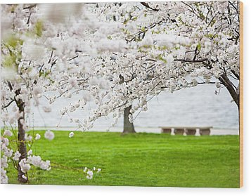 Cherry Blossoms On The Shore Of Fort Mchenry Wood Print