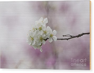 Cherry Blossoms - Out On A Limb Wood Print by Robert E Alter Reflections of Infinity