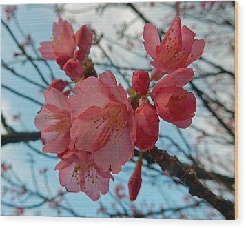 Cherry Blossoms Wood Print by Pamela Walton