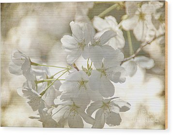 Cherry Blossoms Wood Print by Peggy Hughes