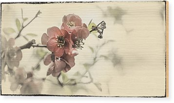 Wood Print featuring the photograph Cherry Blossoms by Peter v Quenter
