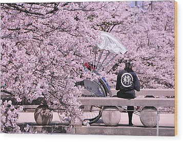 Cherry Blossoms Road Wood Print by Jinjer Templer